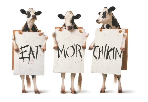 graphic relating to Eat More Chicken Sign Printable titled Chick-fil-A Emblem Font